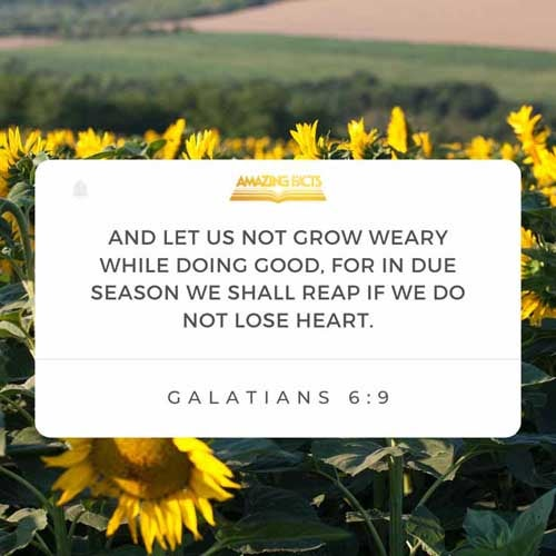 Galatians 6:9 - This Scripture Picture is provided courtesy of Amazing Facts.  Visit us at www.amazingfacts.org