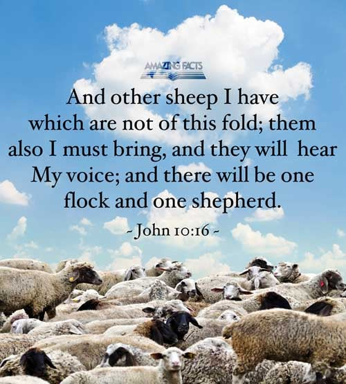 And other sheep I have, which are not of this fold: them also I must bring, and they shall hear my voice; and there shall be one fold, and one shepherd. 