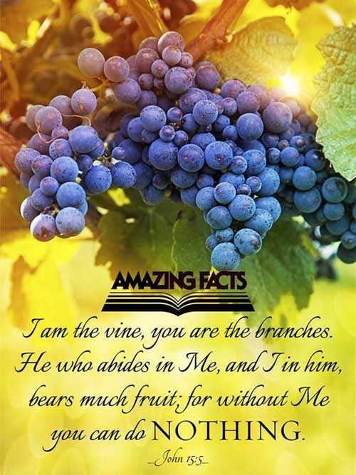 John 15:5 - This Scripture Picture is provided courtesy of Amazing Facts.  Visit us at www.amazingfacts.org
