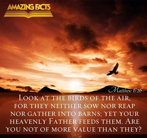 Matthew 6:26 - This scripture Picture is provided courtesy of Amazing Facts.  Visit us at www.amazingfacts.org