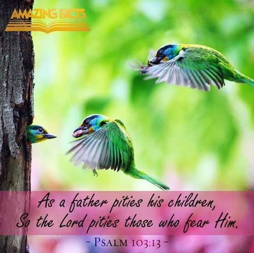 Psalms 103:13 - This Scripture Picture is provided courtesy of Amazing Facts.  Visit us at www.amazingfacts.org
