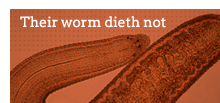 Their worm dieth not