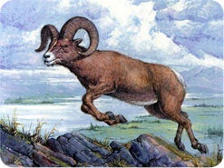 1. Daniel had an amazing vision in which he saw a ram with two horns (Daniel 8:1-4). Whom does this ram represent?