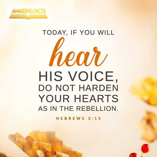 While it is said, To day if ye will hear his voice, harden not your hearts, as in the provocation. 