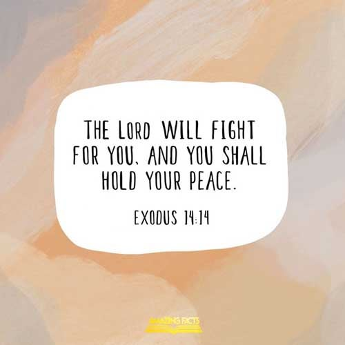 The LORD shall fight for you, and ye shall hold your peace. 