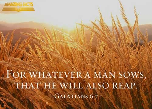 Be not deceived; God is not mocked: for whatsoever a man soweth, that shall he also reap. 
