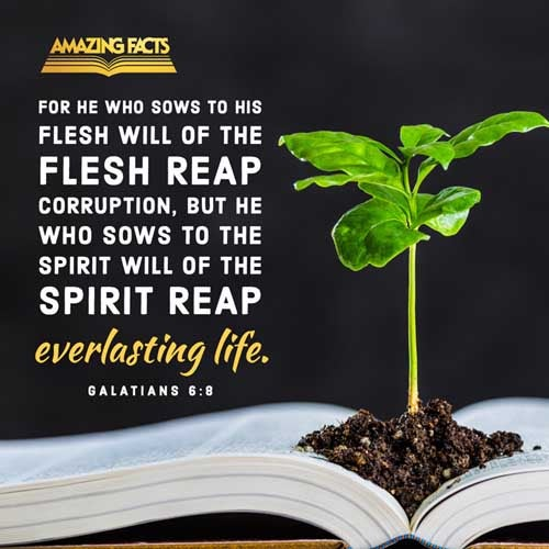 For he that soweth to his flesh shall of the flesh reap corruption; but he that soweth to the Spirit shall of the Spirit reap life everlasting. 