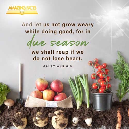 And let us not be weary in well doing: for in due season we shall reap, if we faint not. 