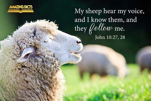 My sheep hear my voice, and I know them, and they follow me:  And I give unto them eternal life; and they shall never perish, neither shall any man pluck them out of my hand. 