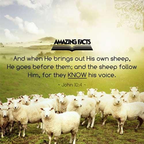 John 10:4