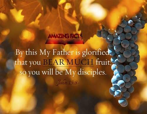 John 15:8