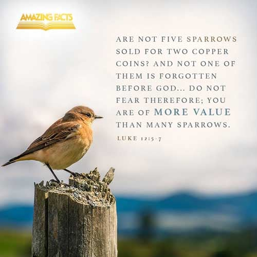 But I will forewarn you whom ye shall fear: Fear him, which after he hath killed hath power to cast into hell; yea, I say unto you, Fear him.  Are not five sparrows sold for two farthings, and not one of them is forgotten before God?  But even the very hairs of your head are all numbered. Fear not therefore: ye are of more value than many sparrows. 