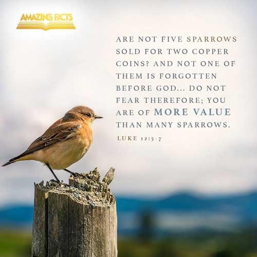 Luke 12:5-7