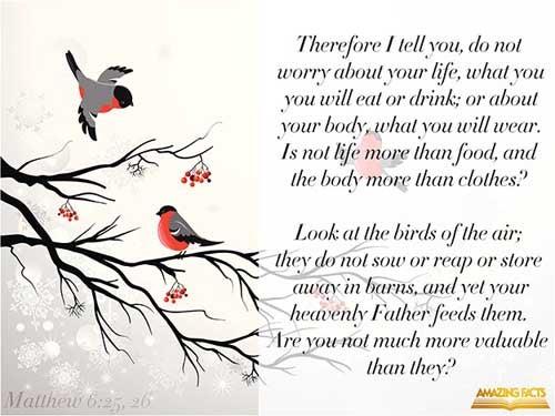Matthew 6:25-26