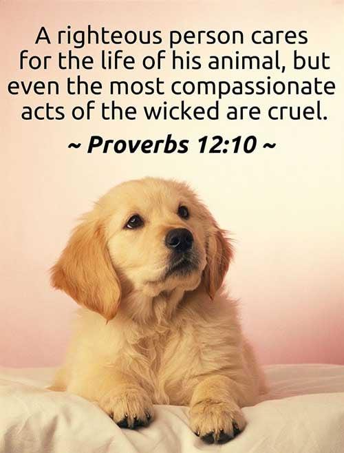 Proverbs 12:10