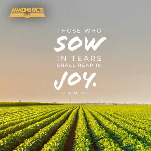 They that sow in tears shall reap in joy. Psalms 126:5