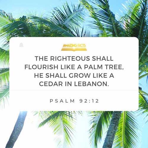 Psalms 92:12