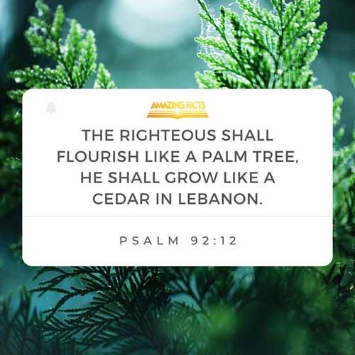 The righteous shall flourish like the palm tree: he shall grow like a cedar in Lebanon. Psalms 92:12