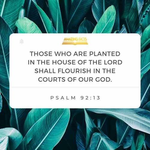 Psalms 92:13