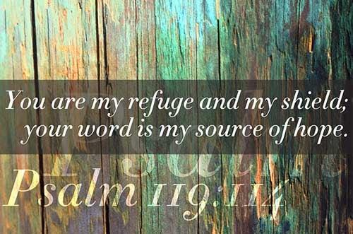 Psalms 119:114