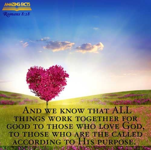 Romans 8:28 - This Scripture Picture is provided courtesy of Amazing Facts. Visit us at www.amazingfacts.org