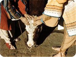 9. 罪のために動物が犠牲にされるとき、その罪はどうなりましたか?
