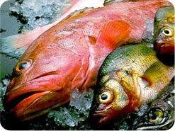 10. どのような魚や魚貝類が清いのですか?